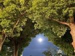 210522先月の満月.jpg